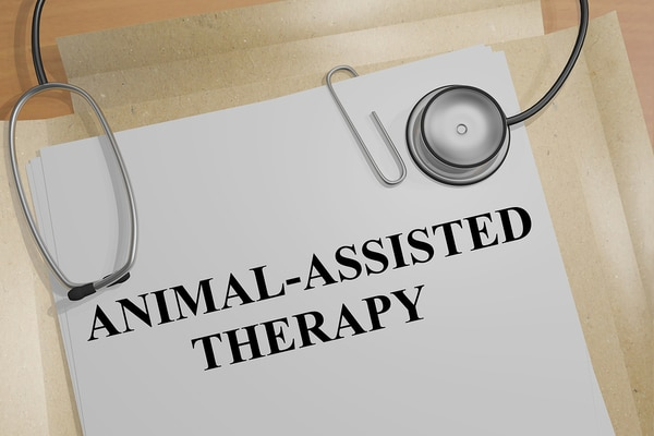 Animal-assisted therapy rehab